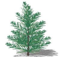 松树su模型