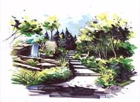 植物配置手绘效果图 JPG