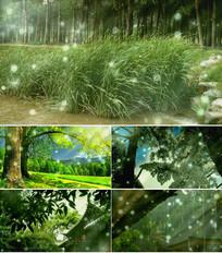 歌曲好大一棵树舞台背景视频