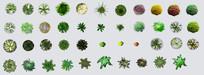 园林植物平面psd素材