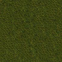 草地贴图素材 JPG