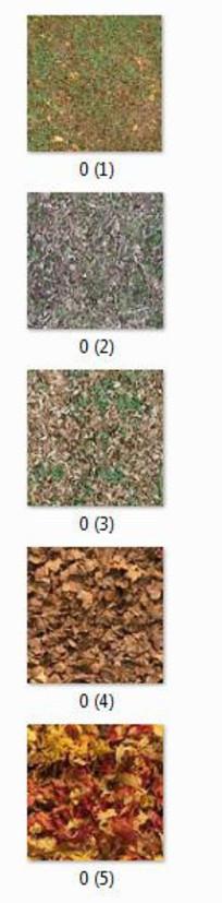 带落叶的草坪平面贴图