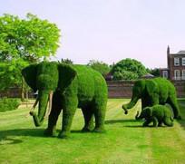 绿化大象植物小品 JPG