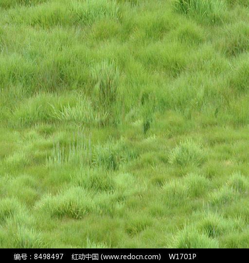 青草地贴图图片