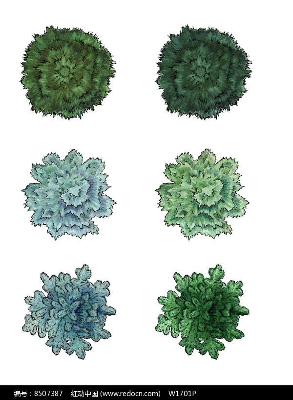 手绘素材精品原创素材下载,您当前访问作品主题是常绿针叶树ps平面