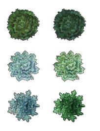 常绿针叶树ps平面图例