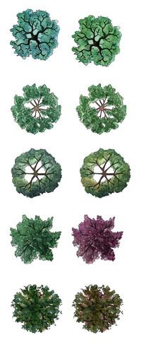ps绘画平面植物_ps平面图片设计素材建筑设计植物v绘画中的亮点图片