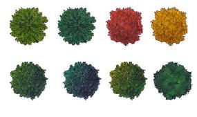 国外风格植物平面图例ps素材