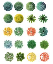 水彩风格ps植物平面图例