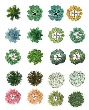 水彩手绘风格ps植物平面图例