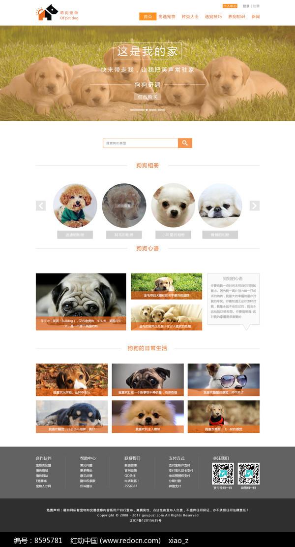 橙色风格宠物网站宠物网页设计图片