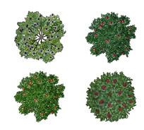 观果树种ps平面图例