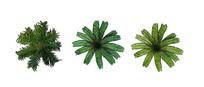 棕榈科植物ps平面图例 PSD