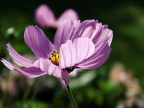 花卉新品种之太空花