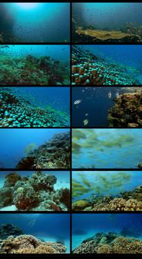 梦幻海底世界视频素材