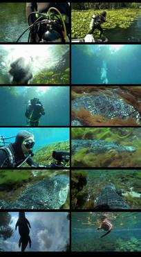 潜水拍摄鳄鱼视频素材