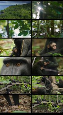 森林里的黑猩猩视频