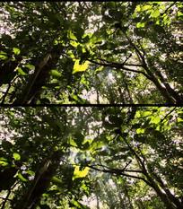 森林视频素材