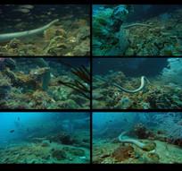 深海海蛇视频