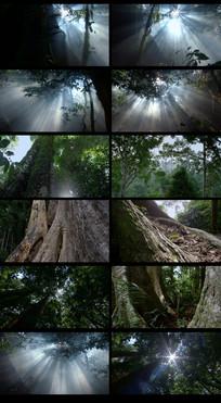 原使茂密森林视频素材