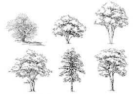 复杂植物单体画法