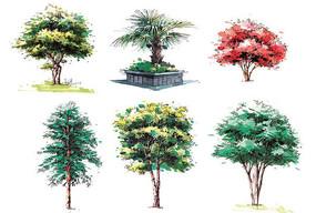 复杂植物单体上色画法