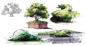灌木单体上色画法