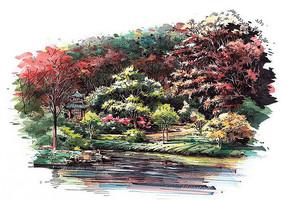 景区植物配置手绘效果图