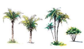 椰子树单体上色