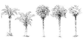 植物单体画法