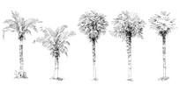 植物单体画法图片