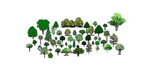 2D手绘卡通树集合 skp