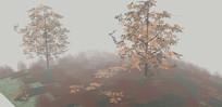 秋天的树木场景