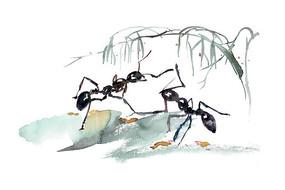 春天的蚂蚁插画 PSD