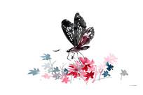 黑色蝴蝶插画