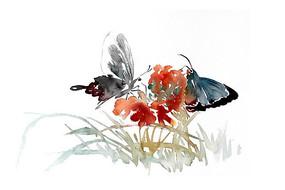 蝴蝶与花卉插画 PSD