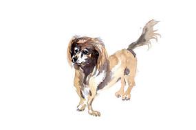 小狗插画 PSD