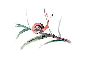 小蜗牛插画 PSD