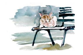 休憩的猫插画 PSD