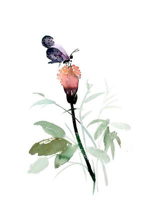 紫色蝴蝶插画 PSD