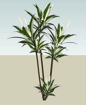 盆栽植物SU skp