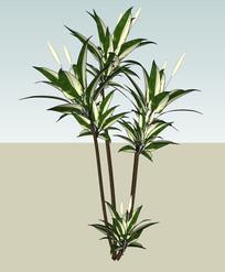 盆栽植物SU