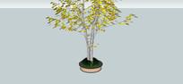 小乔木树池模型