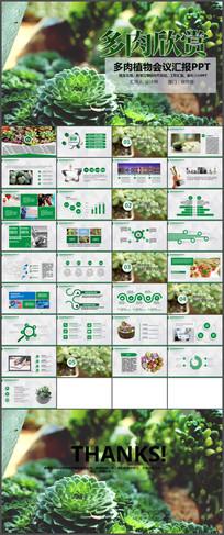 多肉植物介绍PPT模板