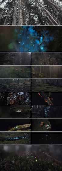 唯美森林树林绿色植物夜光灯视频