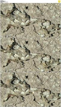 忙碌的蚂蚁实拍视频素材