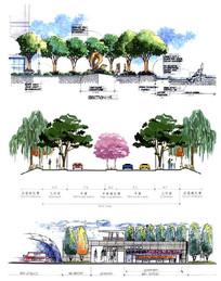 树阵广场和道路景观断面 JPG