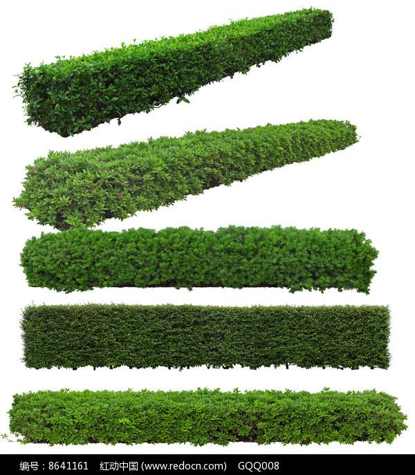 绿篱psd分层素材图片