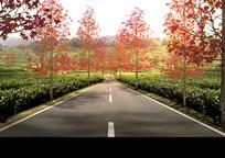 秋季红枫路效果图