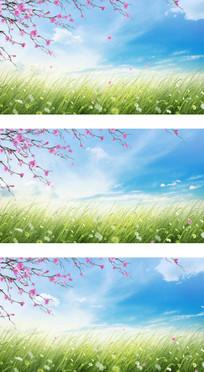 希望的田野上蓝天白云樱花飞舞视频